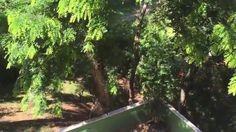 Tiguera 360: Vista da Sacada na Frente da Casa. IMG_8270. 87,2 MB. 10h19...