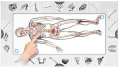 We teamed up with Intel to create a new high definition version of Build a Body that supports multi-touch and multi-player – great for All-in-One devices, but can be played on any computer running Windows. Types Of Science, Science For Kids, Science Images, Multi Touch, Body Systems, Anatomy And Physiology, Ipads, High Definition, Human Body