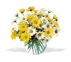 Send these bright and joyful daisies and that special someone's heart will skip a beat or two.