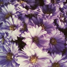#purple #wildflowers #beautfiful #nature #daisies