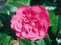 Browse our gallery to find plenty of plants that thrive in the shade.