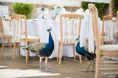 Peacocks | Wedding Gatecrashers | Northbrook Park | Image by Especially Amy