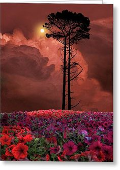 2328 Greeting Card by Peter Holme III
