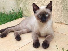 Esse é o meu gatinho se chama Chocolate❤️