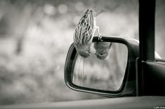 if you spend your days looking in the review mirror you won't see what's right infront of you