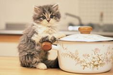 23+ Cutest Tiny Cats That You Will Love