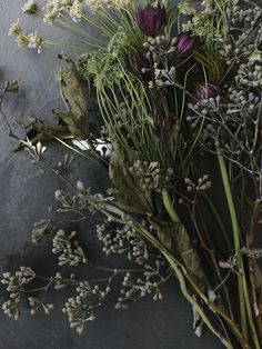 ❈ Fleurs Foncées ❈ dark art photography flowers & botanical prints - Polux Fleuriste
