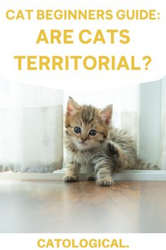 Wonder why your cat seems so protective of you? Learn about why your cat may have territorial tendencies and what they do to mark their territories! #CatFacts #CatTips #CatBlog #CatBlogger #CatBehavior Information About Cats, Cat Info, Cat Care Tips, Pet Care, Cat Apartment, Cute Cat Names, Cat Behavior Problems, Cat Health Care, Kitten Care