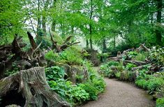"""Tree stumps were favored in Victorian times for showing off exotic woodland plants like ferns and orchids. They called such stump-based gardens a """"stumpery."""" Image via Outline Productions."""
