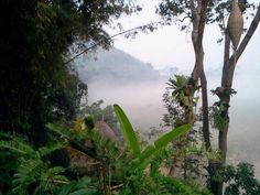A magical morning of 2014 at Four Seasons Tented Camp Golden Triangle, Thailand.