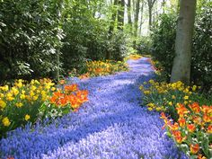 Flower symbolism: Path of Bluebell flowers ... symbolize the magical path of fairies and enchantment