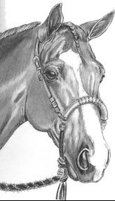 Portrait Mastery - Artist Unknown - pencil portrait of horse wearing bosal Discover The Secrets Of Drawing Realistic Pencil Portraits. pencil-portrait-m. Discover The Secrets Of Drawing Realistic Pencil Portraits Horse Pencil Drawing, Horse Drawings, Pencil Art Drawings, Realistic Drawings, Art Drawings Sketches, Animal Drawings, Arte Equina, Horse Sketch, Horse Artwork