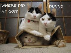 """Photo from """"Cat House on the Kings"""" cat rescue shelter."""