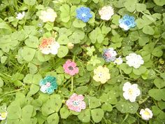 tiny crotcheted cotton flowers :)