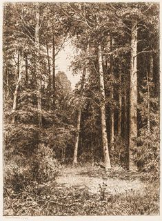 Forest , 1885 - Ivan Ivanovich Shishkin