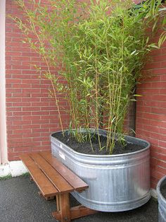 Galvanized tub fountain, water garden, ottoman or just a planter, see these creative DIY galvanized tub uses in the garden! Galvanized Stock Tank, Galvanized Planters, Trough Planters, Deck Planters, Rectangular Planters, Planter Boxes, Bamboo In Pots, Potted Bamboo, Bamboo Grass
