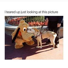fav ! #disney #pluto #cute #dog #omg #. .. X @lievemariax by beautyblog.ll