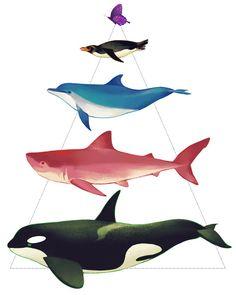 Free! ~ Makoto (orca), Rin (shark), Haruka (dolphin), Nagisa (penguin), and Rei (beautiful butterfly)