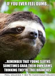 Image Result For Funny Memes Clean Sloths Funny Sloth Dumb And Dumber