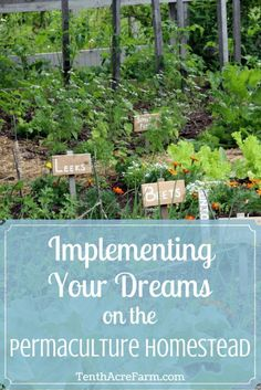 Implementing Your Dreams on the Permaculture Homestead