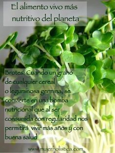 Los germinados son de las comidas mas nutritivas en el mundo. Aprende a hacer los #germinados de #semillas en casa