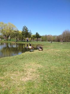 Parc Michel Chartrand, Longueuil, Qc