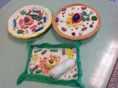 Science For Passion: Come realizzare a scuola un modello di cellula animale e vegetale