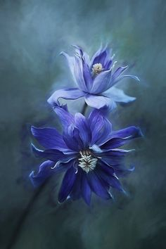 Clematis Blue by clint hudson - 500px