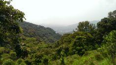 Walking around Kadoorie farm, can see Tai Po in the distance