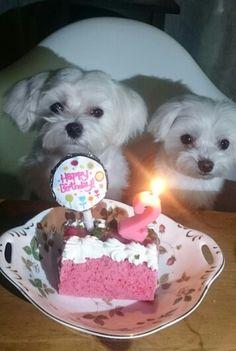 ペス子 2才のお誕生日 おめでとう