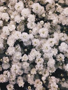 white vintage blooms