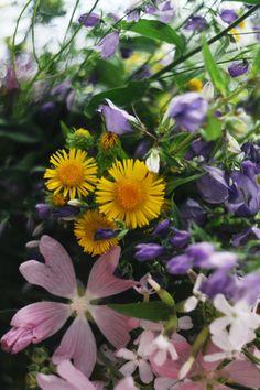Wildflowers - null