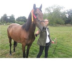 Horsedeals - Height:16.0 hh Age:3 Colour:Bay Sex:Filly Breed:Andalusian Terms:For Sale Location:Gloucestershire P/Trade:Private Price:£ 850.00  ONO Ad Code:8-9-13-871427