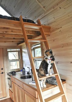 tiny house - cat & ladder