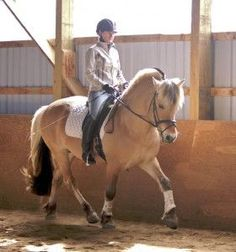 Rider Fitness Tip of the Month: Fixing Riding Posture – Riders with Rounded Shoulders