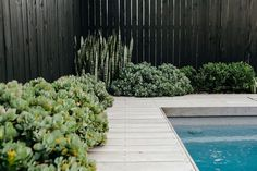 """Formed Gardens on Instagram: """"Grey green tones    POOLSIDE @gretacottage_gerringong #gretacottage #gerringong #airbnb"""" Water Wise, Air B And B, Green And Grey, Mid-century Modern, Swimming Pools, Mid Century, Cottage, Gardens, Outdoor Decor"""