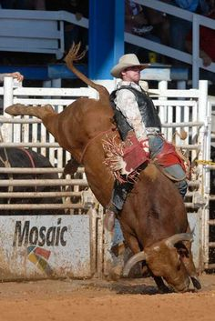 Bull Rider, Arcadia Rodeo by Eric Seibert, via Flickr