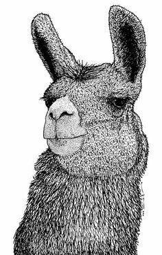 Llama Drawing by Karl Addison Art And Illustration, Illustrations, Alpacas, Doodles Zentangles, Alpaca Drawing, Llama Stuffed Animal, Llama Arts, Llama Alpaca, You Draw