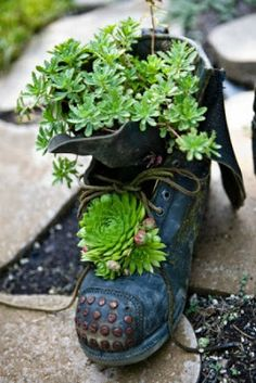 84260146a8df38 Shoes Upcycling  Just a Picture Transplant Succulents