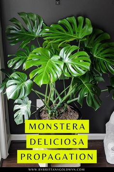 Plant Crafts, Plant Projects, Garden Projects, Garden Ideas, Pothos Plant, Plant Propagation, Cuttings, Gardening Tips, Kitchen Gardening