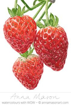 "Strawberries © 2009 ~ annamasonart.com ~ 23 x 31 cm (9"" x 12"") #AnnaMasonNewSite"