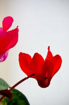 Spring is coming, by Hiya Wayne