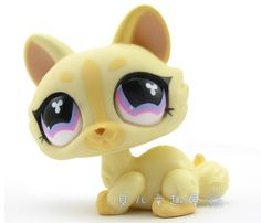 Oh my gosh, I think that this is so cute, I believe that this is a Bon Bon cat.