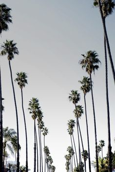 Creative Photography, Palm, Los, Angeles, and Trees image ideas & inspiration on Designspiration Palm Trees Tumblr, San Myshuno, Destinations, Wanderlust, Tree Wallpaper, California Dreamin', California Palm Trees, Strand, Trip Planning