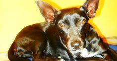 Bonny, dall'inferno delle perreras spagnole a una nuova vita in Italia
