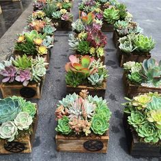 """5,613 Likes, 76 Comments - Jen Tao (@jenssuccs) on Instagram: """"**Giveaway Closed** Amazing succulent planters in beautiful handmade boxes using reclaimed wood by…"""""""