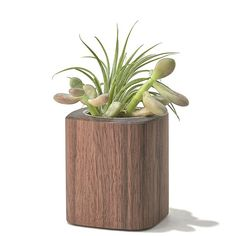 Succulent Planter: Solid Walnut Wood Planter, Aluminum Lined