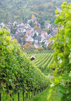 Uhlbach Vineyards, Germany