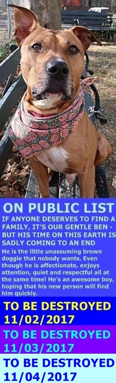 MURDERED 11/04/17 --- Hello, my name is Ben. My animal id is #10776. I am a male brown dog at the Manhattan Animal Care Center. The shelter thinks I am about 4 years 1 weeks old. I came into the shelter as a aco impound on 25-Oct-2017. http://nycdogs.urgentpodr.org/ben-10776/