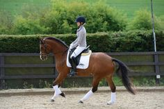 Sometimes planning and executing an effective schooling session can feel like a mission, Horse&Rider has designed some great schooling plans here. Horse Riding Tips, Horse Horse, Andalusian Horse, Friesian Horse, Arabian Horses, Palomino, Horse Exercises, Training Exercises, Clydesdale